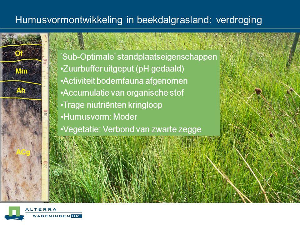 Humusvormontwikkeling in beekdalgrasland: verdroging 'Sub-Optimale' standplaatseigenschappen Zuurbuffer uitgeput (pH gedaald) Activiteit bodemfauna afgenomen Accumulatie van organische stof Trage niutriënten kringloop Vegetatie: Verbond van zwarte zegge Humusvorm: Moder