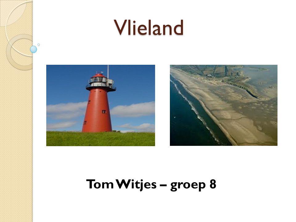 Vlieland Tom Witjes – groep 8