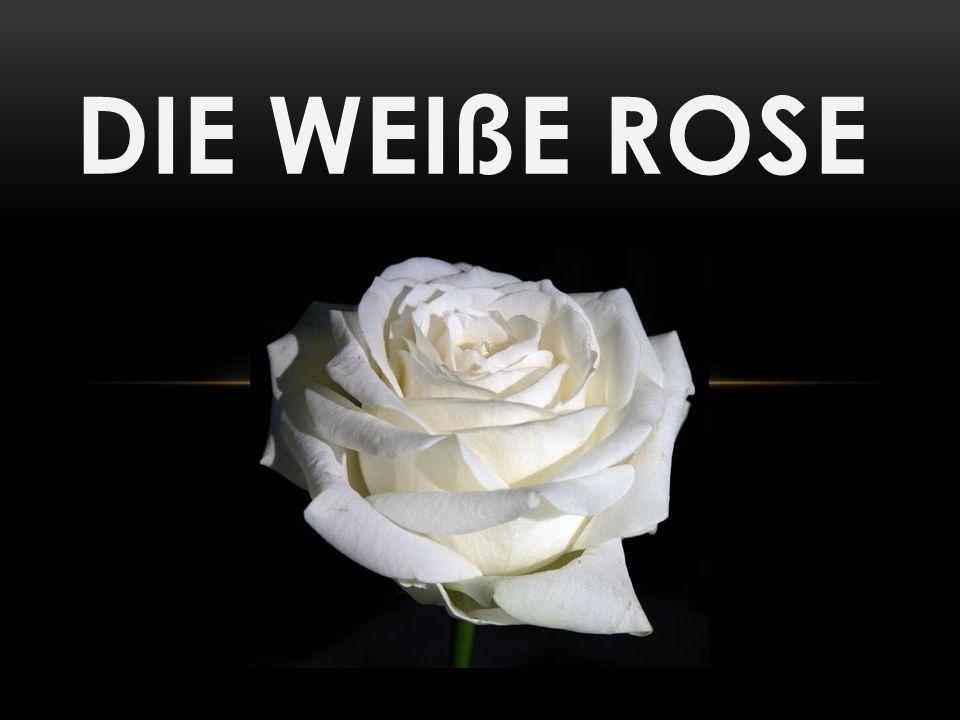 DIE WEIßE ROSE Verzetsgroep van studenten in München juni 1942-februari 1943 Geïnspireerd door hun christen Beïnvloed door ervaringen aan het front en berichten van vrienden over massamoorden in Polen en kwaadheid over de deportatie van Joden en tegenstanders van het regime schreven zij pamfletten tegen het Nazi-regime