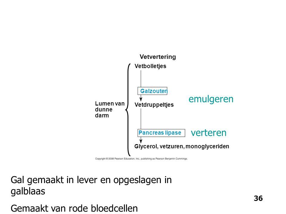 Lumen van dunne darm Vetvertering Vetbolletjes Vetdruppeltjes Pancreas lipase Galzouten Glycerol, vetzuren, monoglyceriden 36 emulgeren verteren Gal g