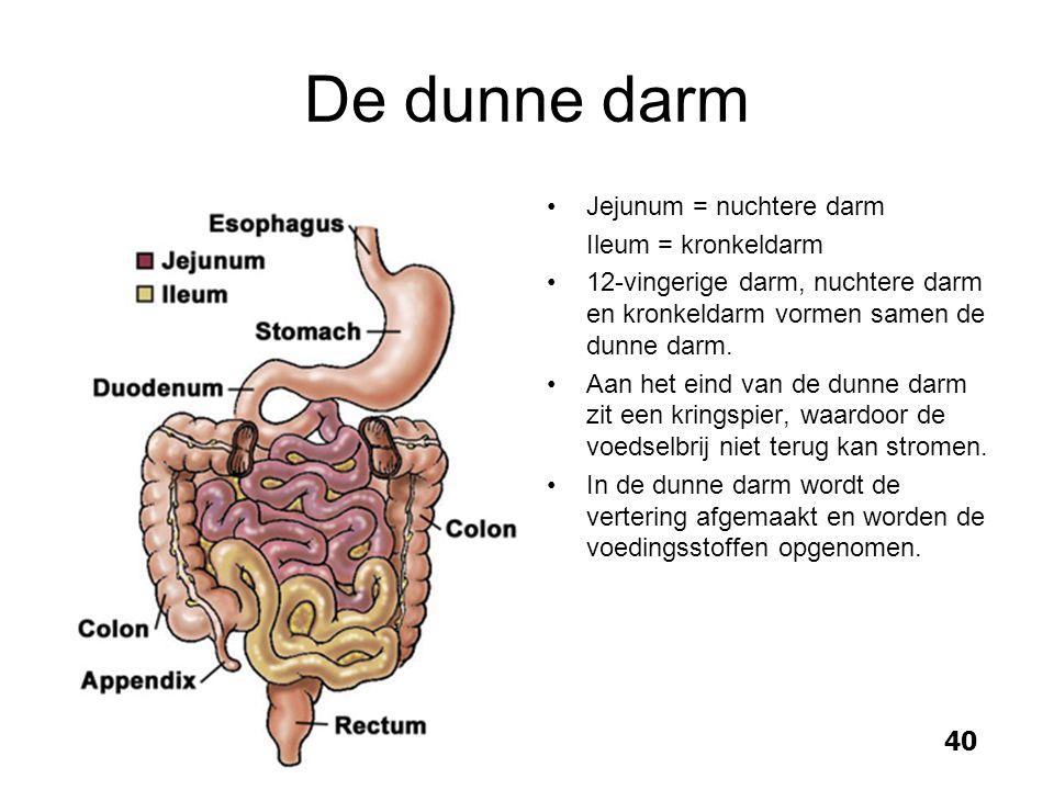 De dunne darm Jejunum = nuchtere darm Ileum = kronkeldarm 12-vingerige darm, nuchtere darm en kronkeldarm vormen samen de dunne darm. Aan het eind van