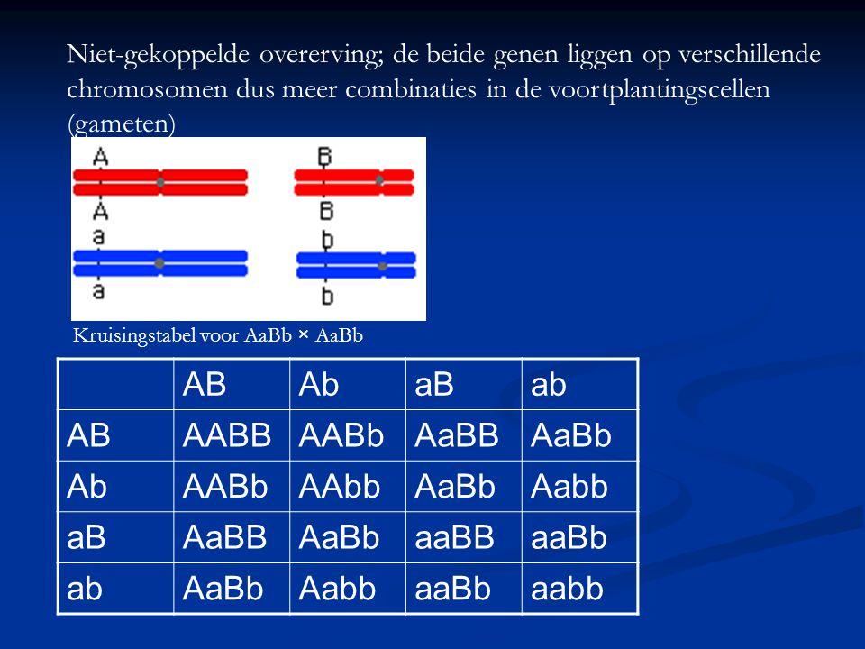 Niet-gekoppelde overerving; de beide genen liggen op verschillende chromosomen dus meer combinaties in de voortplantingscellen (gameten) ABAbaBab ABAA
