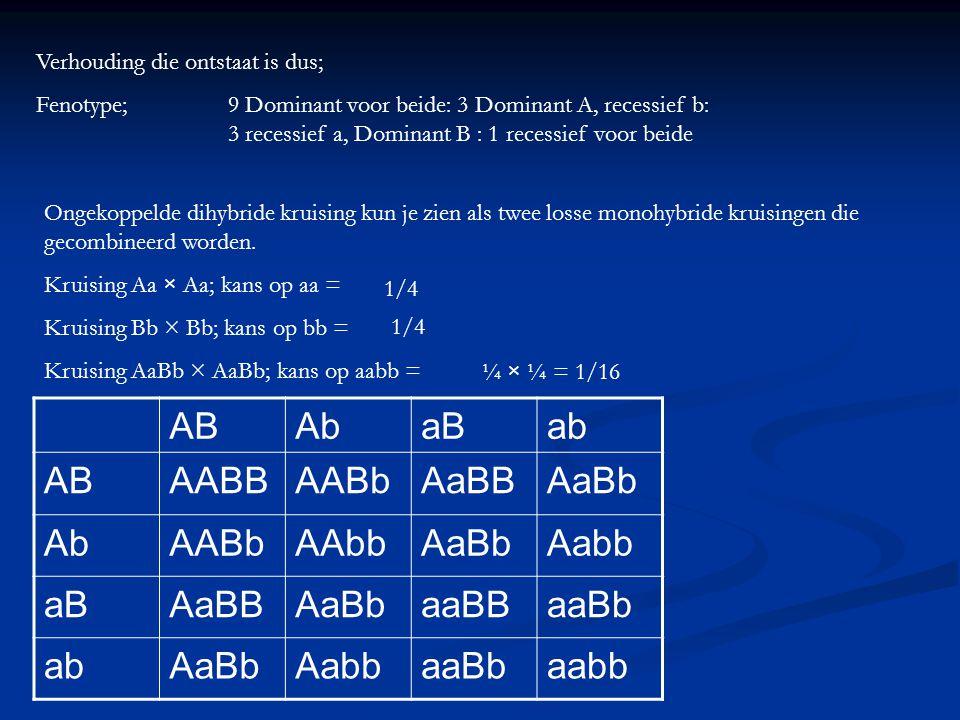 Verhouding die ontstaat is dus; Fenotype; 9 Dominant voor beide: 3 Dominant A, recessief b: 3 recessief a, Dominant B : 1 recessief voor beide Ongekop