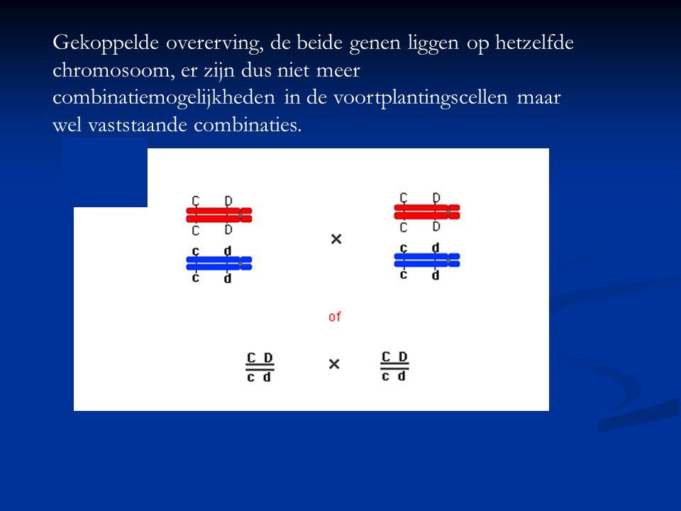 Gekoppelde overerving, de beide genen liggen op hetzelfde chromosoom, er zijn dus niet meer combinatiemogelijkheden in de voortplantingscellen maar we