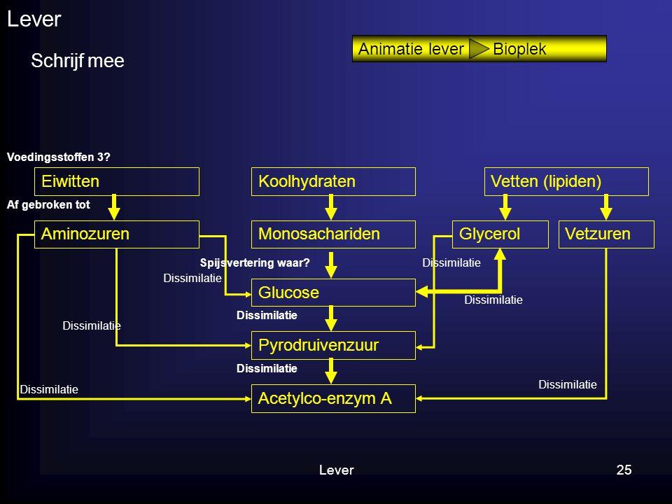 25 Lever Schrijf mee Animatie lever Bioplek Eiwitten AminozurenMonosachariden Glucose Pyrodruivenzuur Glycerol KoolhydratenVetten (lipiden) Vetzuren A