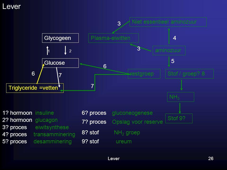 Lever26 Lever Glycogeen Glucose 12 Niet essentieel aminozuur 1? hormoon 2? hormoon aminozuur 4 Plasma-eiwitten 3 3 5 3? proces 4? proces restgroepStof