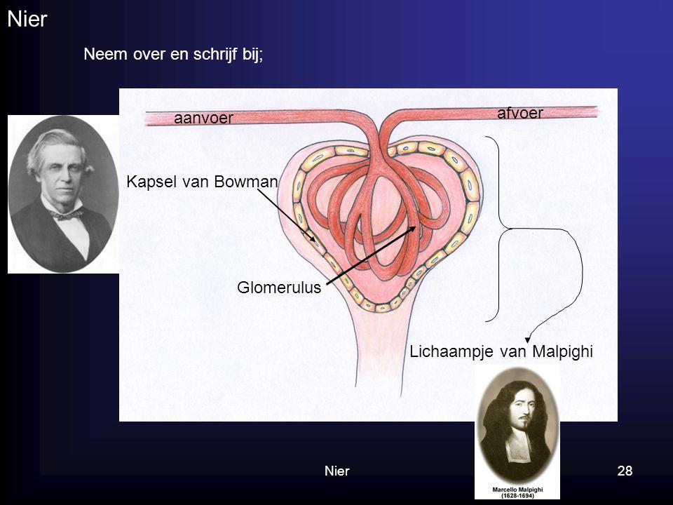 Nier28 Nier afvoer aanvoer Kapsel van Bowman Neem over en schrijf bij; Lichaampje van Malpighi Glomerulus