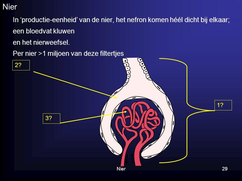 Nier29 Nier In 'productie-eenheid' van de nier, het nefron komen héél dicht bij elkaar; een bloedvat kluwen en het nierweefsel. Per nier >1 miljoen va