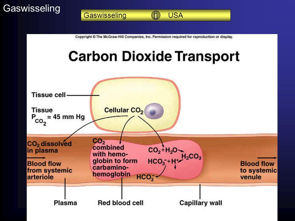Anatomie en fysiologie14 Gaswisseling