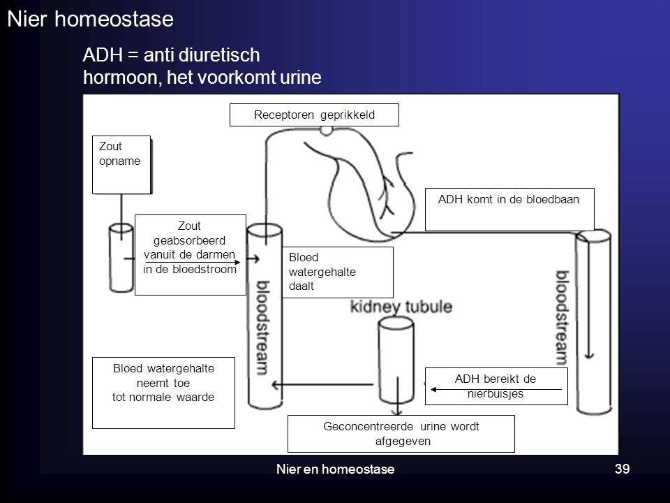 Nier en homeostase39 Nier homeostase ADH = anti diuretisch hormoon, het voorkomt urine Zout opname Bloed watergehalte daalt Receptoren geprikkeld ADH