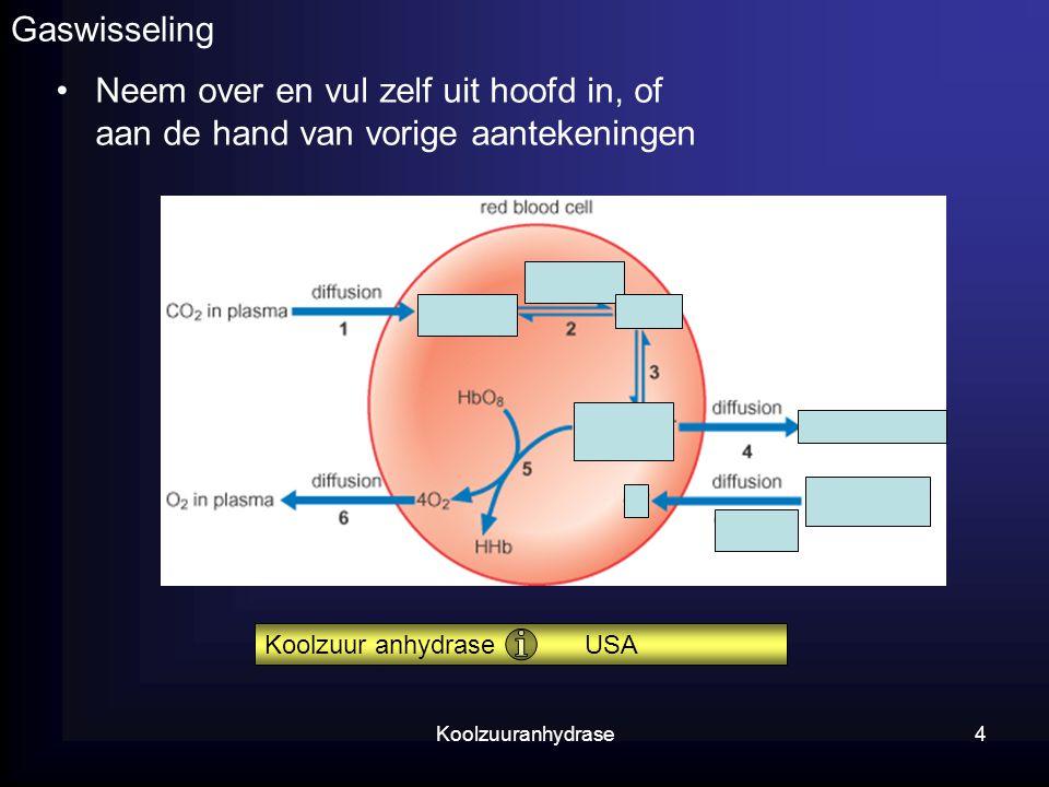 Koolzuuranhydrase4 Gaswisseling Neem over en vul zelf uit hoofd in, of aan de hand van vorige aantekeningen Koolzuur anhydrase USA