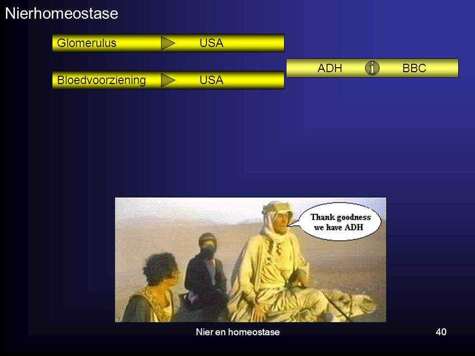 Nier en homeostase40 Nierhomeostase ADH BBC Glomerulus USA BloedvoorzieningUSA