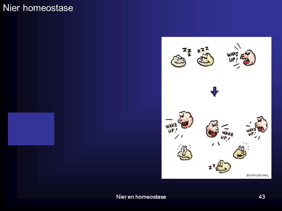 Nier en homeostase43 Nier homeostase