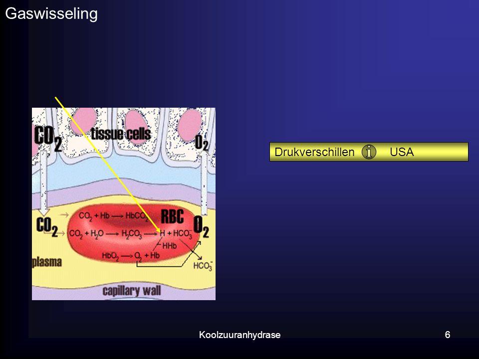 Koolzuuranhydrase6 Gaswisseling Drukverschillen USA