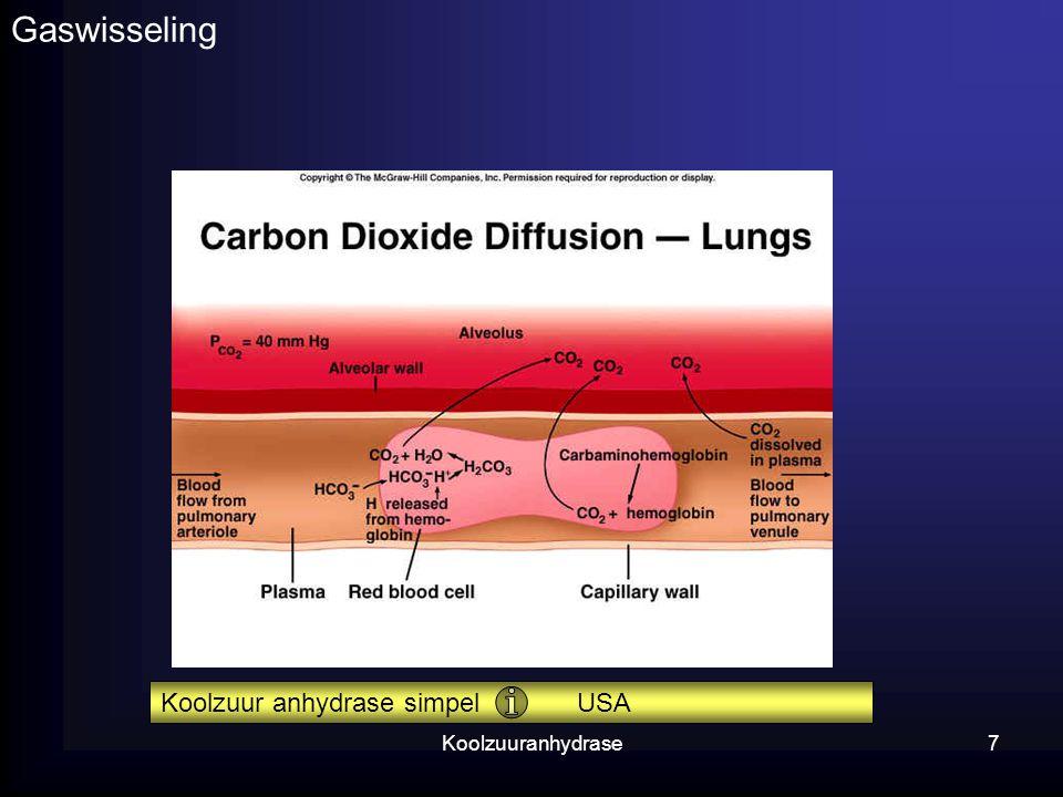 Koolzuuranhydrase7 Gaswisseling Koolzuur anhydrase simpel USA