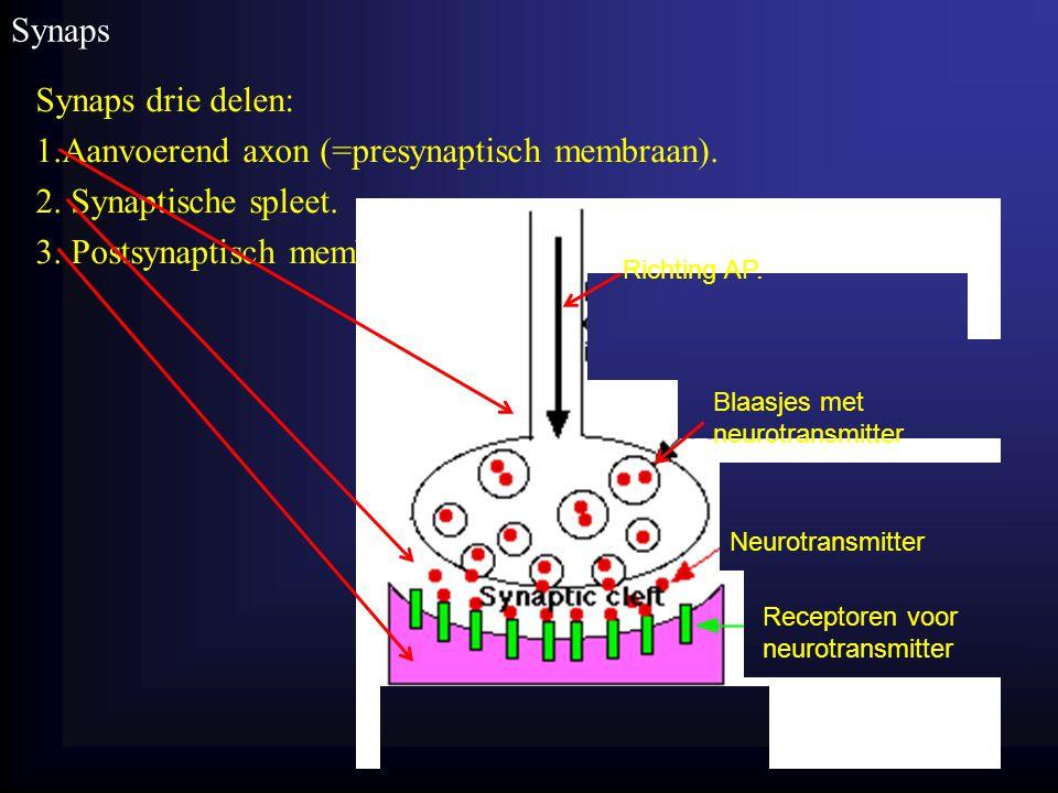 Homeostase Synaps Synaps drie delen: 1.Aanvoerend axon (=presynaptisch membraan). 2. Synaptische spleet. 3. Postsynaptisch membraan. 19 Blaasjes met n