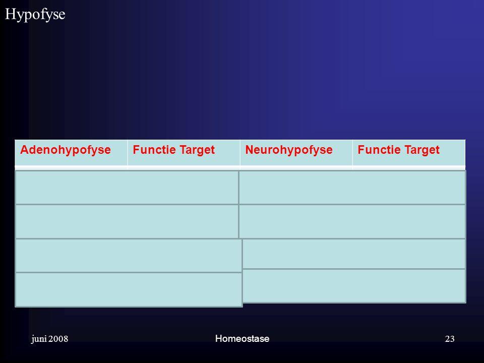 juni 2008 Homeostase Hypofyse. 23 AdenohypofyseFunctie TargetNeurohypofyseFunctie Target GroeihormoonGroei algemeenOxytocineWeeën melkproductie Prolac