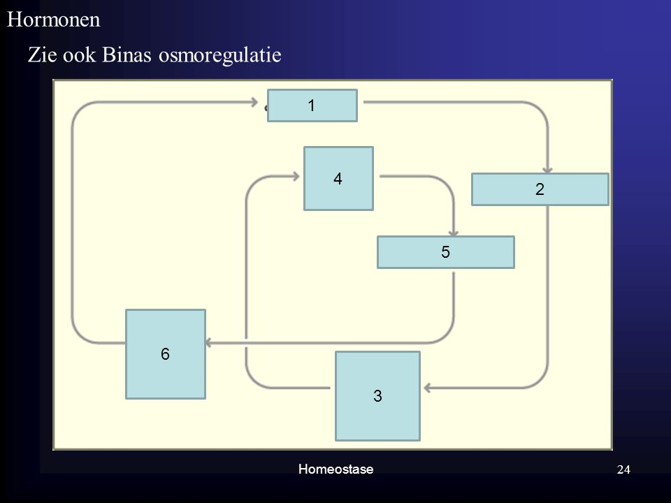 Homeostase Hormonen Zie ook Binas osmoregulatie 24 1 2 3 4 5 6