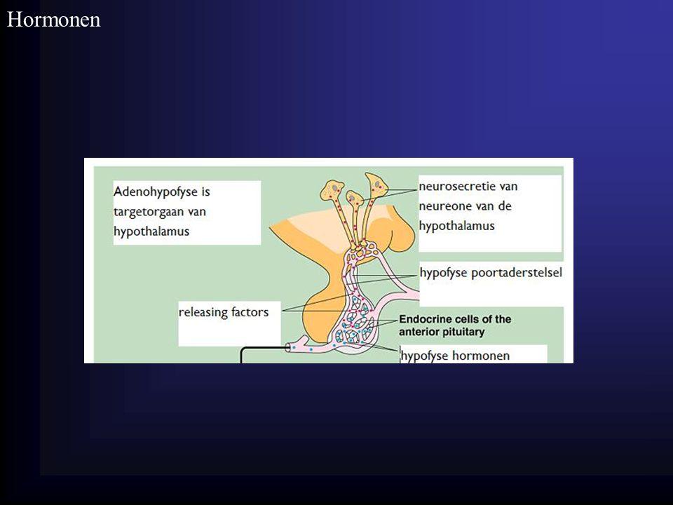 Homeostase Hormonen 26