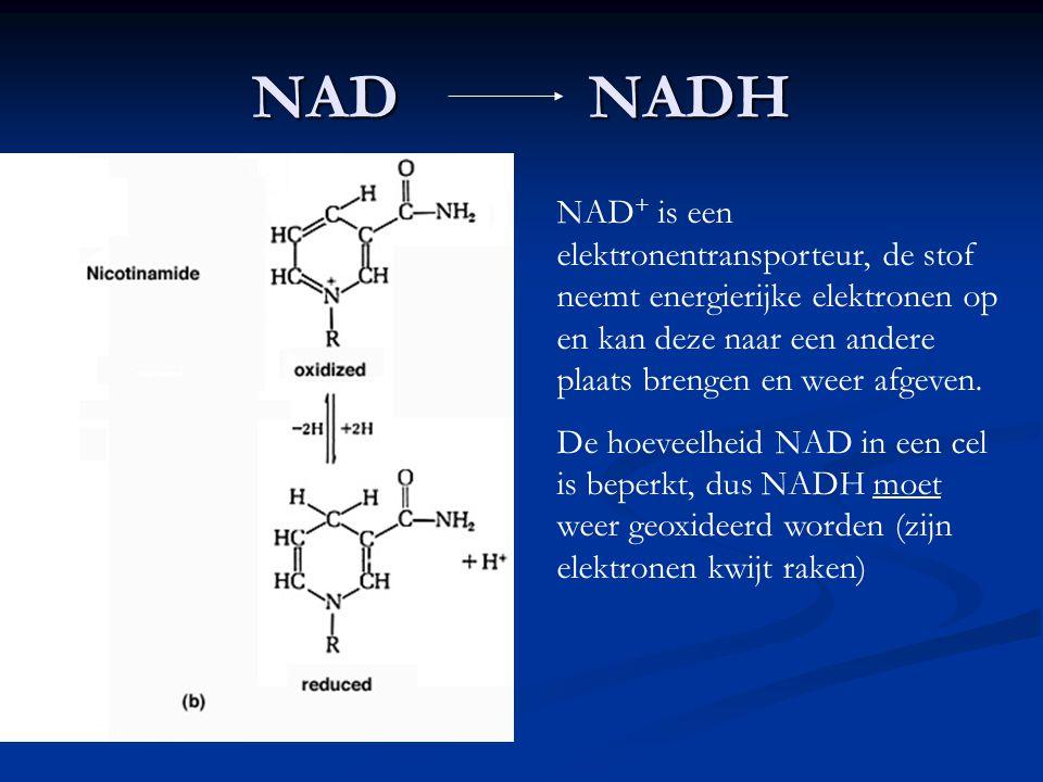 NAD NADH NAD + is een elektronentransporteur, de stof neemt energierijke elektronen op en kan deze naar een andere plaats brengen en weer afgeven. De