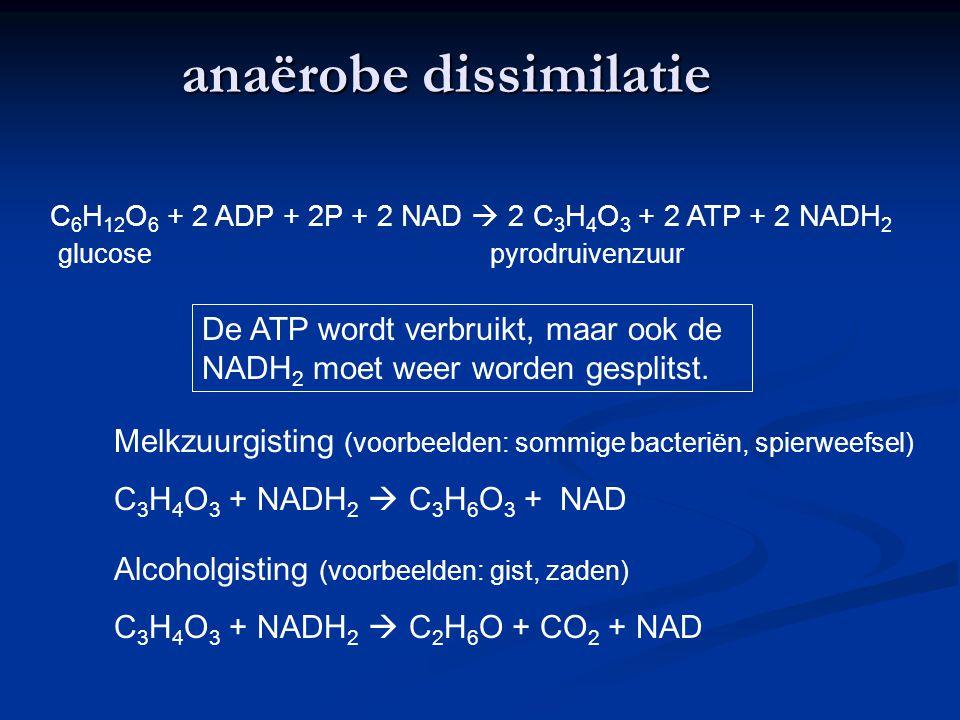 anaërobe dissimilatie C 6 H 12 O 6 + 2 ADP + 2P + 2 NAD  2 C 3 H 4 O 3 + 2 ATP + 2 NADH 2 glucosepyrodruivenzuur De ATP wordt verbruikt, maar ook de