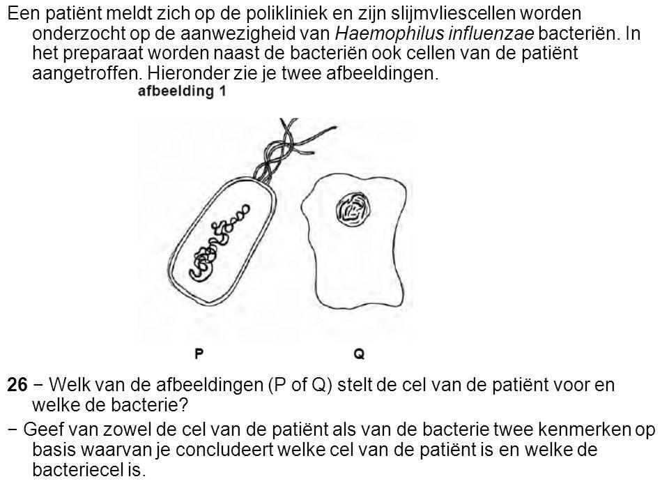 Een patiënt meldt zich op de polikliniek en zijn slijmvliescellen worden onderzocht op de aanwezigheid van Haemophilus influenzae bacteriën. In het pr