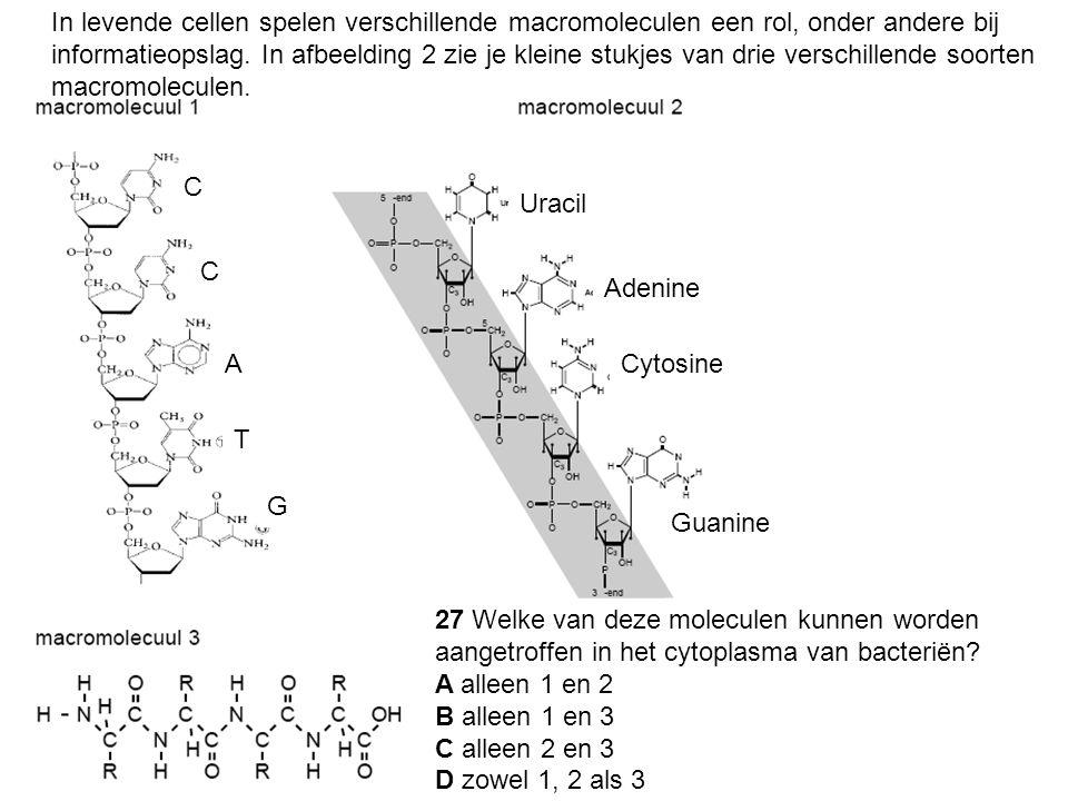 In levende cellen spelen verschillende macromoleculen een rol, onder andere bij informatieopslag. In afbeelding 2 zie je kleine stukjes van drie versc