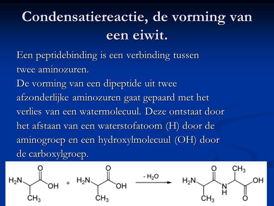 Condensatiereactie, de vorming van een eiwit. Een peptidebinding is een verbinding tussen twee aminozuren. De vorming van een dipeptide uit twee afzon