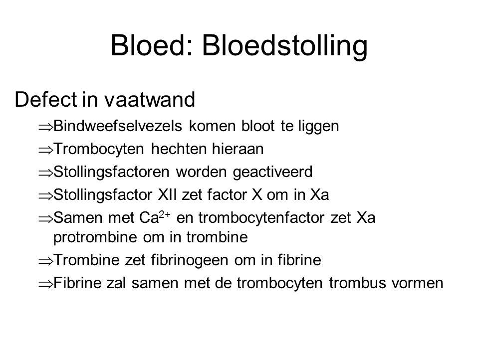 Bloed: Bloedstolling Defect in vaatwand  Bindweefselvezels komen bloot te liggen  Trombocyten hechten hieraan  Stollingsfactoren worden geactiveerd  Stollingsfactor XII zet factor X om in Xa  Samen met Ca 2+ en trombocytenfactor zet Xa protrombine om in trombine  Trombine zet fibrinogeen om in fibrine  Fibrine zal samen met de trombocyten trombus vormen
