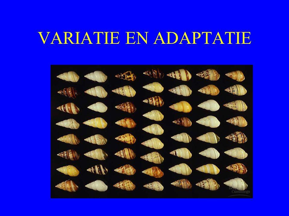 VARIATIE EN ADAPTATIE
