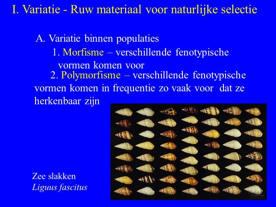 I. Variatie - Ruw materiaal voor naturlijke selectie A. Variatie binnen populaties 1. Morfisme – verschillende fenotypische vormen komen voor 2. Polym