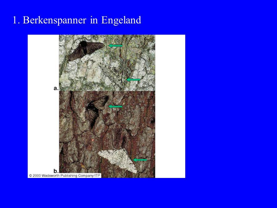 1. Berkenspanner in Engeland