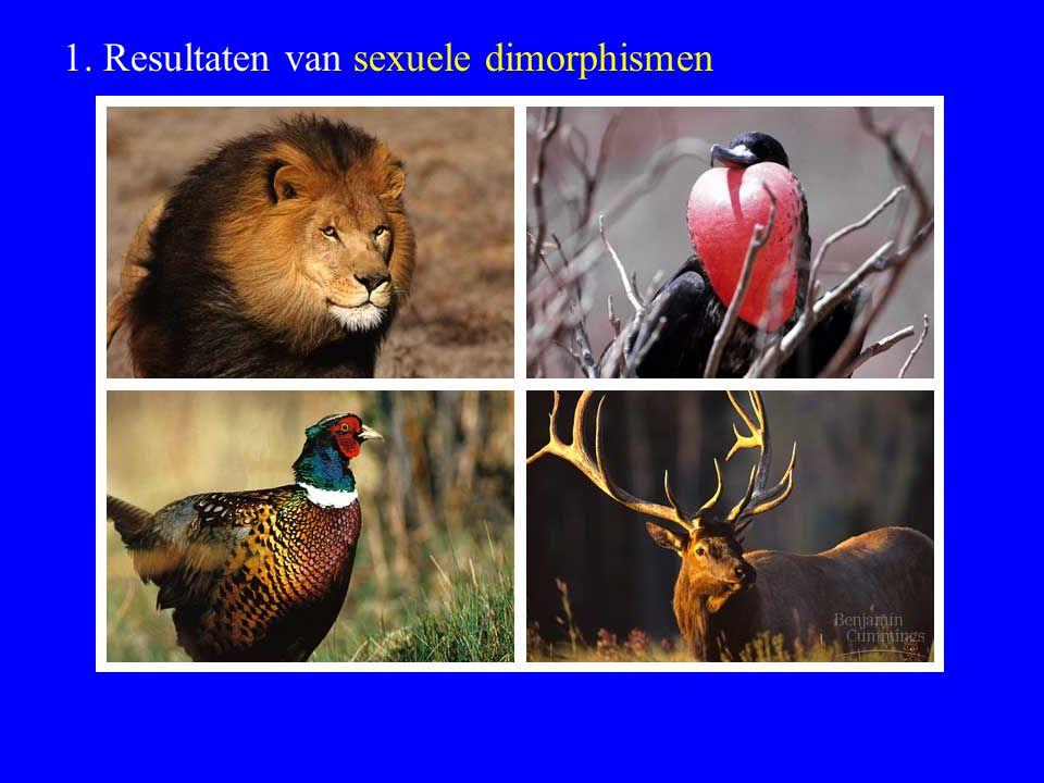 1. Resultaten van sexuele dimorphismen
