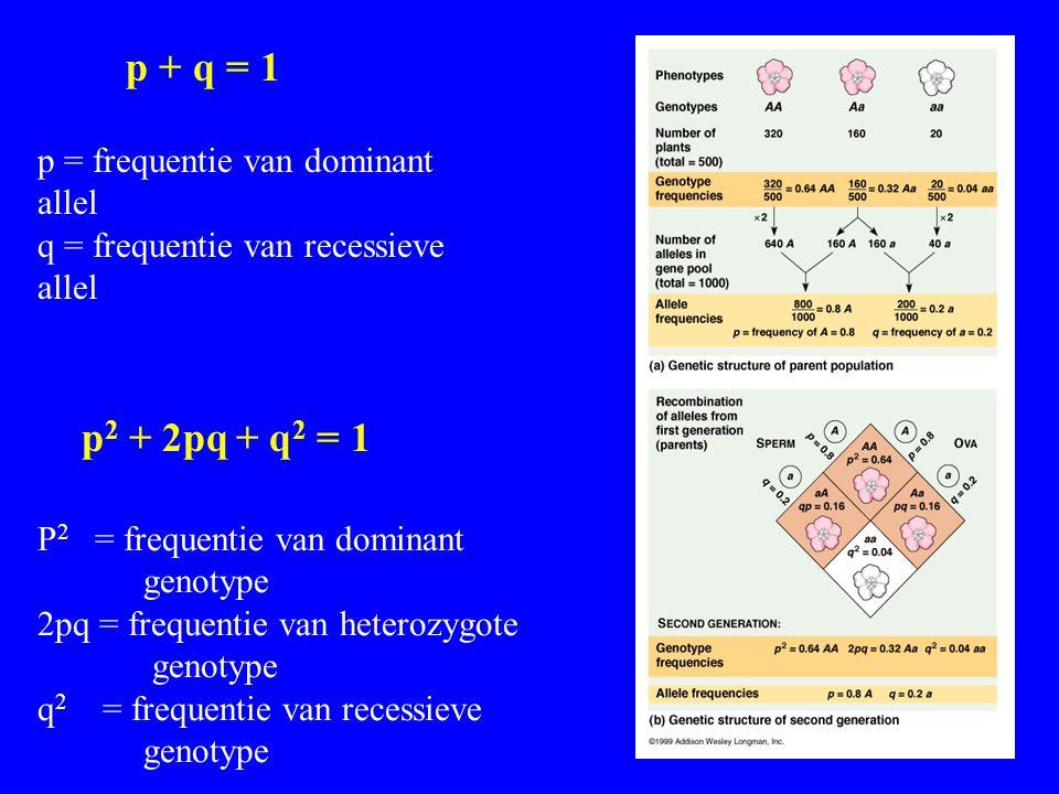p + q = 1 p = frequentie van dominant allel q = frequentie van recessieve allel p 2 + 2pq + q 2 = 1 P 2 = frequentie van dominant genotype 2pq = frequ