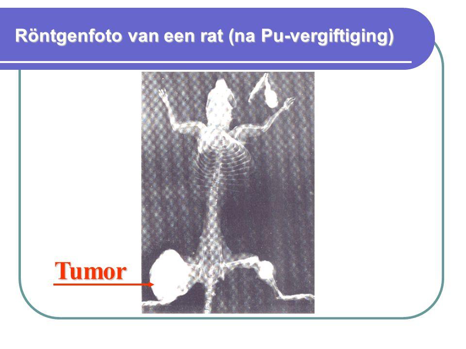 Röntgenfoto van een rat (na Pu-vergiftiging) Tumor