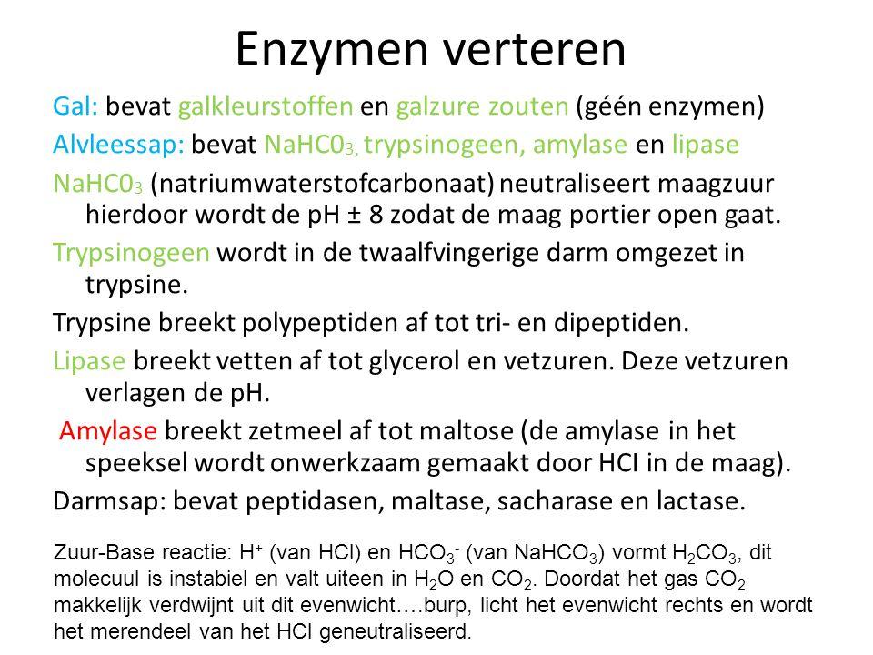 Enzymen verteren Speeksel (pH ± 7): bevat water, slijm en amylase. Amylase breekt zetmeel af tot maltose. Dit gebeurt in de mondholte, slokdarm en een