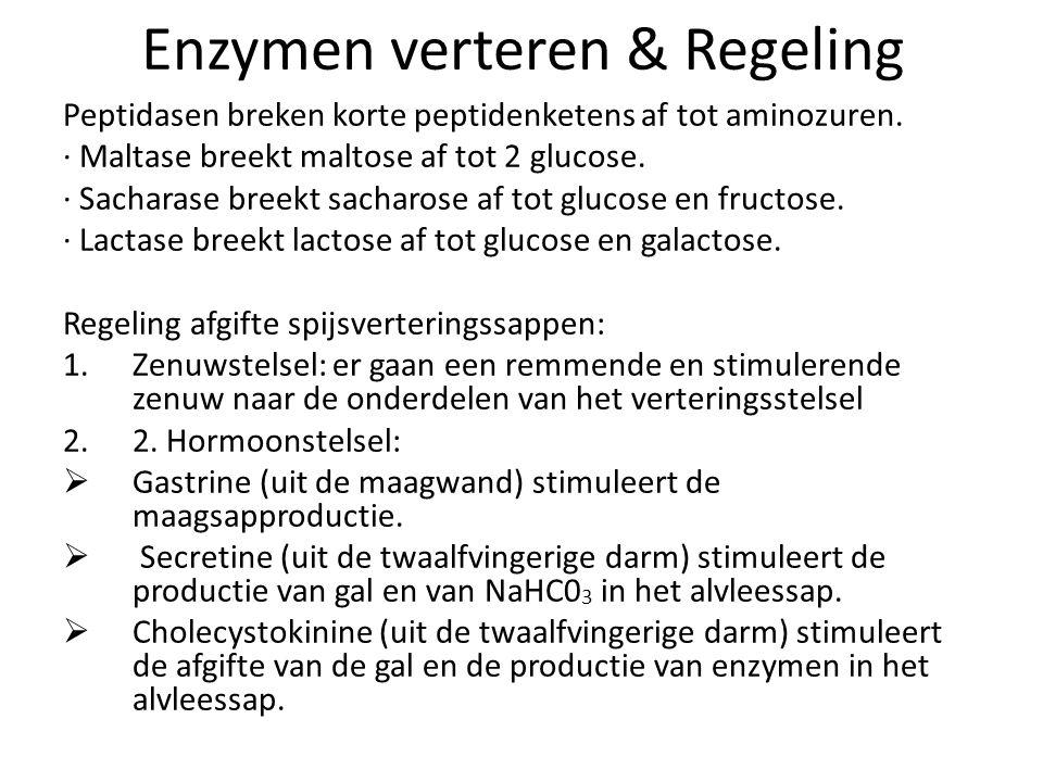 Gal: bevat galkleurstoffen en galzure zouten (géén enzymen) Alvleessap: bevat NaHC0 3, trypsinogeen, amylase en lipase NaHC0 3 (natriumwaterstofcarbon
