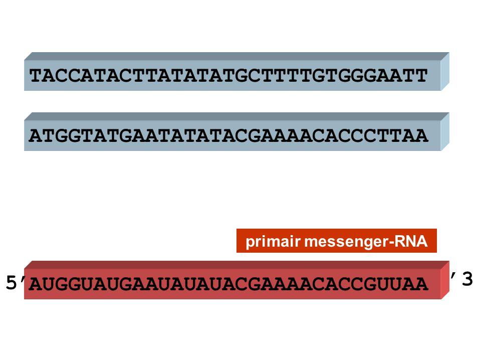 ATGGTATGAATATATACGAAAACACCCTTAA TACCATACTTATATATGCTTTTGTGGGAATT AUGGUAUGAAUAUAUACGAAAACACCGUUAA primair messenger-RNA 5' '3