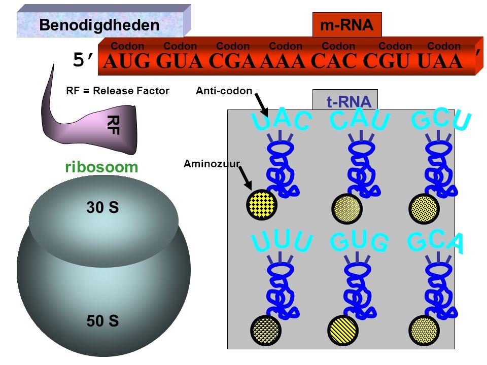 AUG GUA CGA AAA CAC CGU UAA m-RNA ribosoom t-RNA Benodigdheden RF RF = Release Factor 30 S 50 S Anti-codon Codon Aminozuur 5' '3