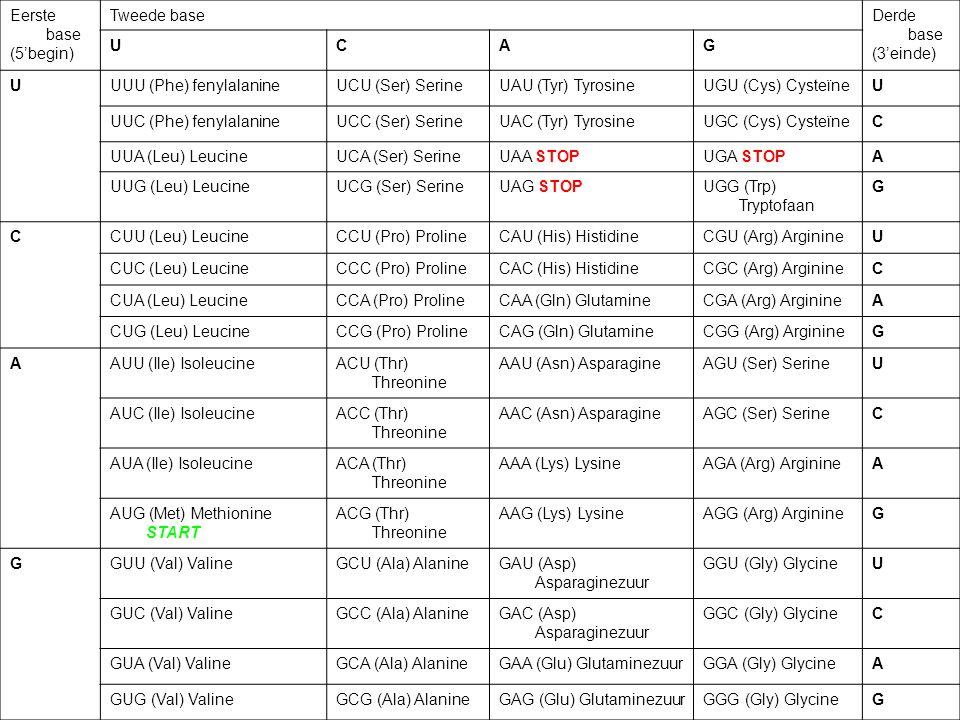 Eerste base (5'begin) Tweede baseDerde base (3'einde) UCAG UUUU (Phe) fenylalanineUCU (Ser) SerineUAU (Tyr) TyrosineUGU (Cys) CysteïneU UUC (Phe) feny