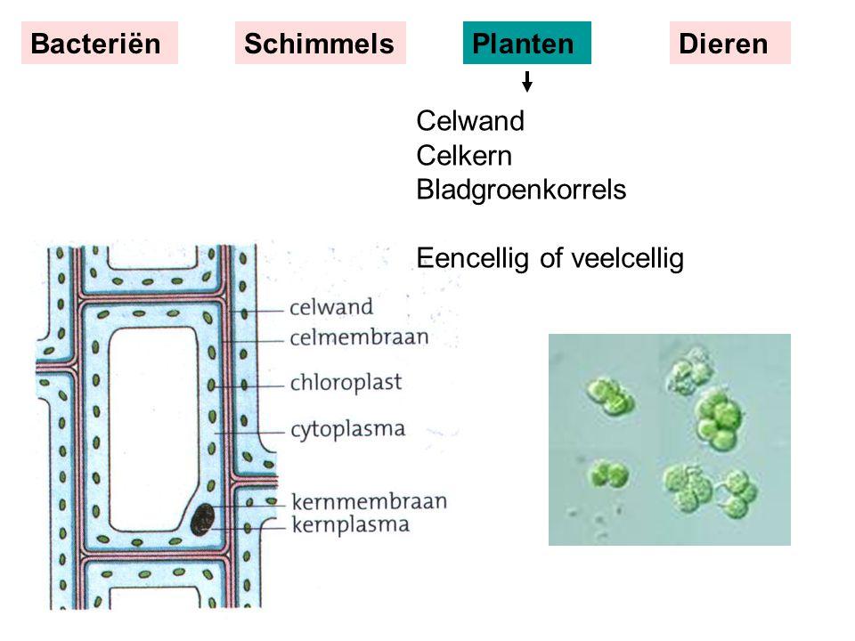 Celwand Celkern Bladgroenkorrels Eencellig of veelcellig BacteriënSchimmelsPlantenDieren