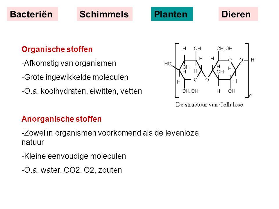 BacteriënSchimmelsPlantenDieren Organische stoffen -Afkomstig van organismen -Grote ingewikkelde moleculen -O.a. koolhydraten, eiwitten, vetten Anorga
