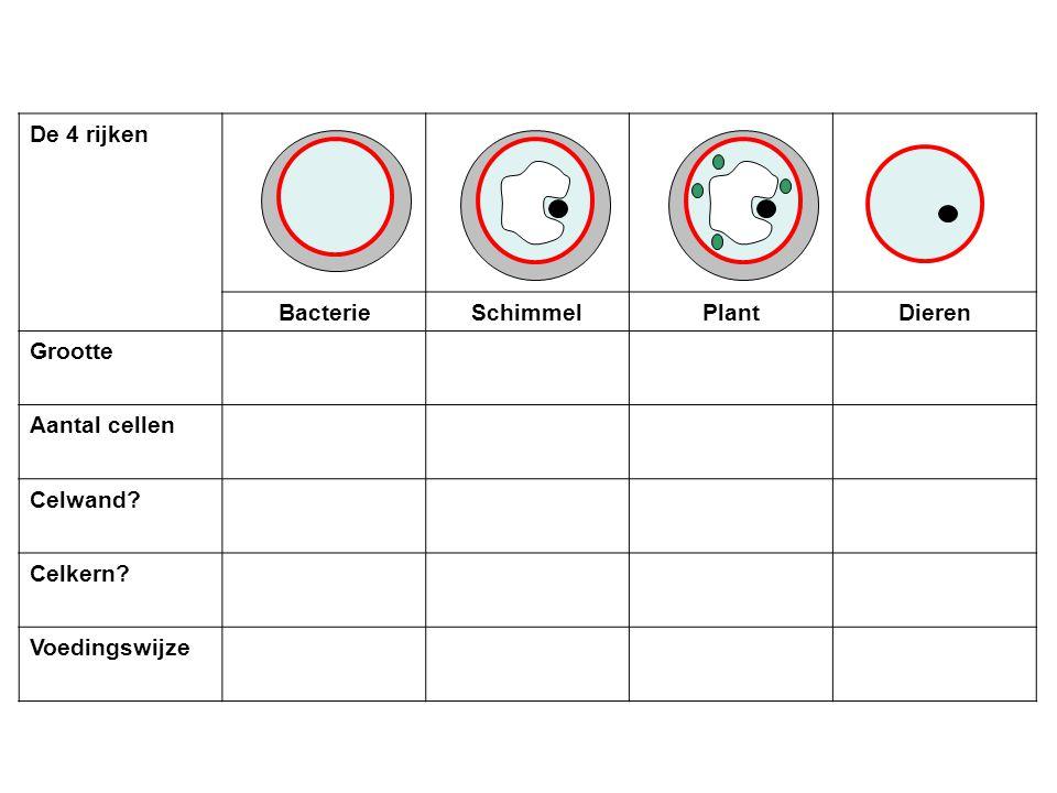 De 4 rijken BacterieSchimmelPlantDieren Grootte Aantal cellen Celwand? Celkern? Voedingswijze