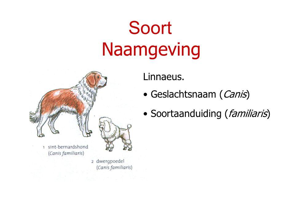 Soort Naamgeving Linnaeus. Geslachtsnaam (Canis) Soortaanduiding (familiaris)
