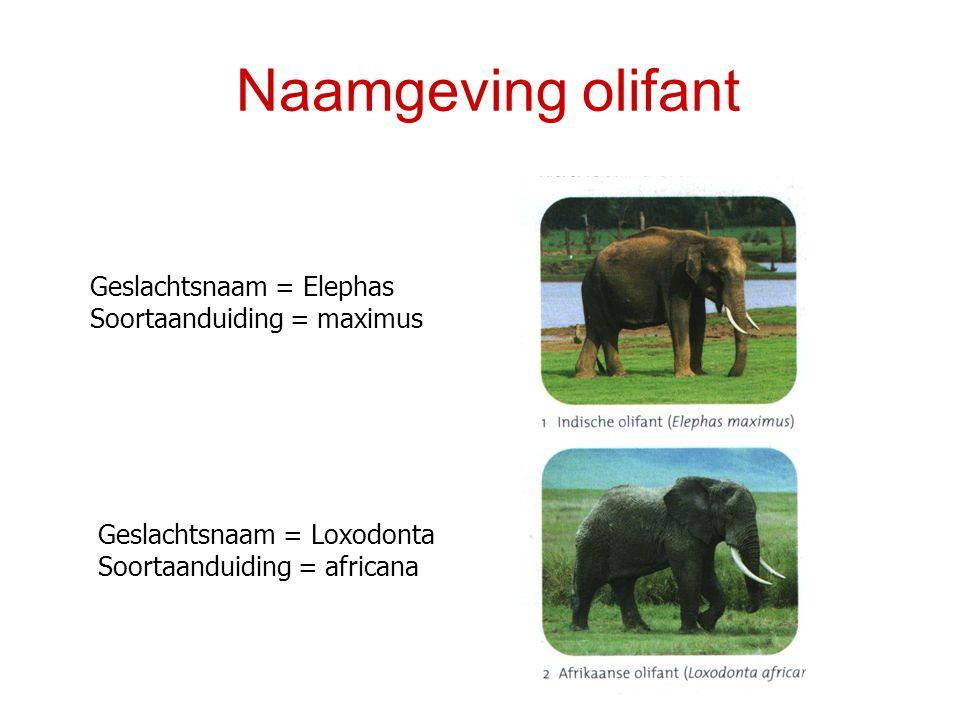 Naamgeving olifant Geslachtsnaam = Elephas Soortaanduiding = maximus Geslachtsnaam = Loxodonta Soortaanduiding = africana