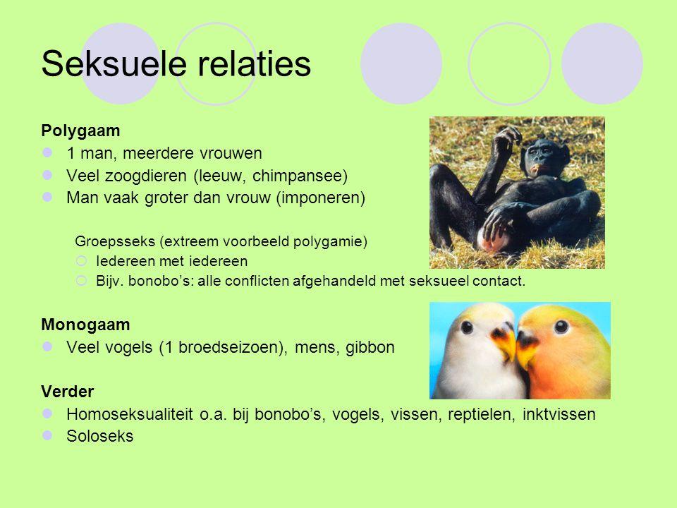 Seksuele relaties Polygaam 1 man, meerdere vrouwen Veel zoogdieren (leeuw, chimpansee) Man vaak groter dan vrouw (imponeren) Groepsseks (extreem voorbeeld polygamie)  Iedereen met iedereen  Bijv.