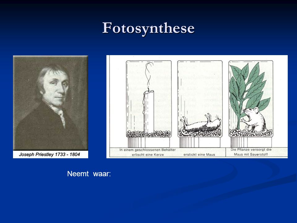 2 Fotosynthese Neemt waar: