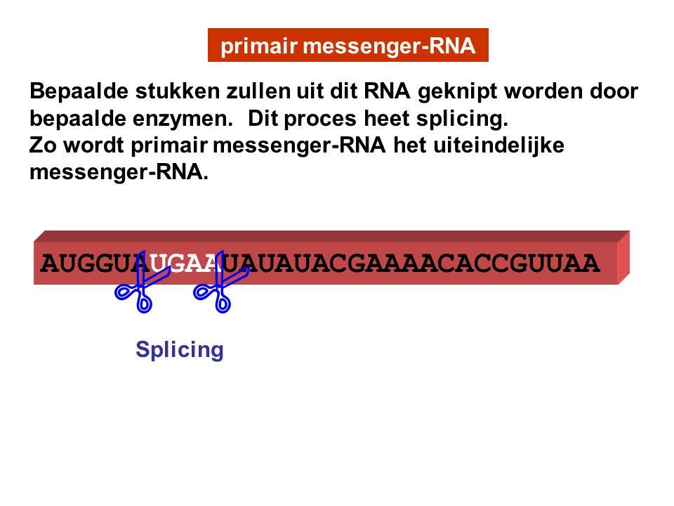AUGGUAUGAAUAUAUACGAAAACACCGUUAA primair messenger-RNA  Splicing Bepaalde stukken zullen uit dit RNA geknipt worden door bepaalde enzymen. Dit proces