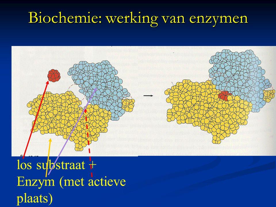 Biochemie: binding aan enzymen 1: vanderWaals 2: hydrofobe binding 3: H-brug 4: elektrostatische (= ion) -binding)