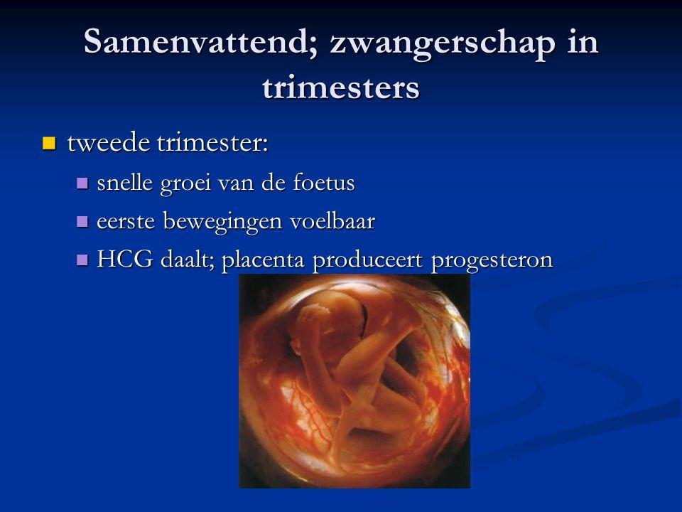 Samenvattend; zwangerschap in trimesters tweede trimester: tweede trimester: snelle groei van de foetus snelle groei van de foetus eerste bewegingen v